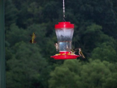 Post image for Hummingbirds In Flight, An Author's Journey